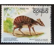 Конго (3355)