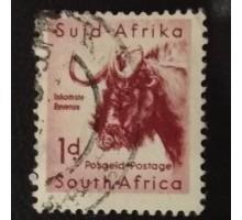 ЮАР (4298)