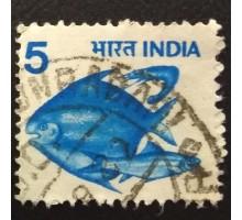 Индия (4359)